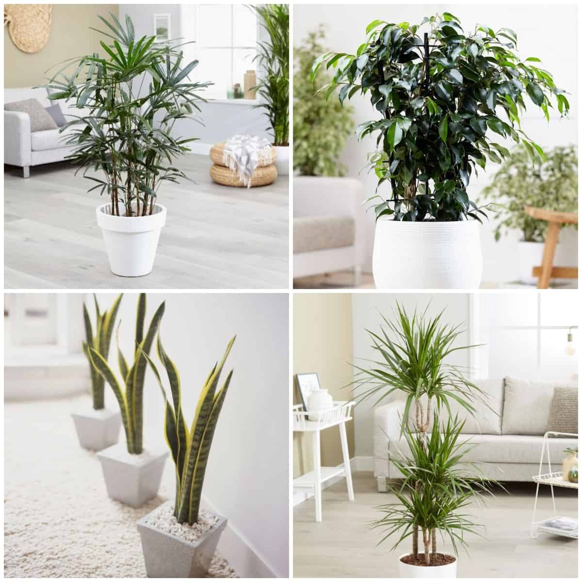amazing-creation-Six-Plants-that-Purify-the-Air-in-Your-Home