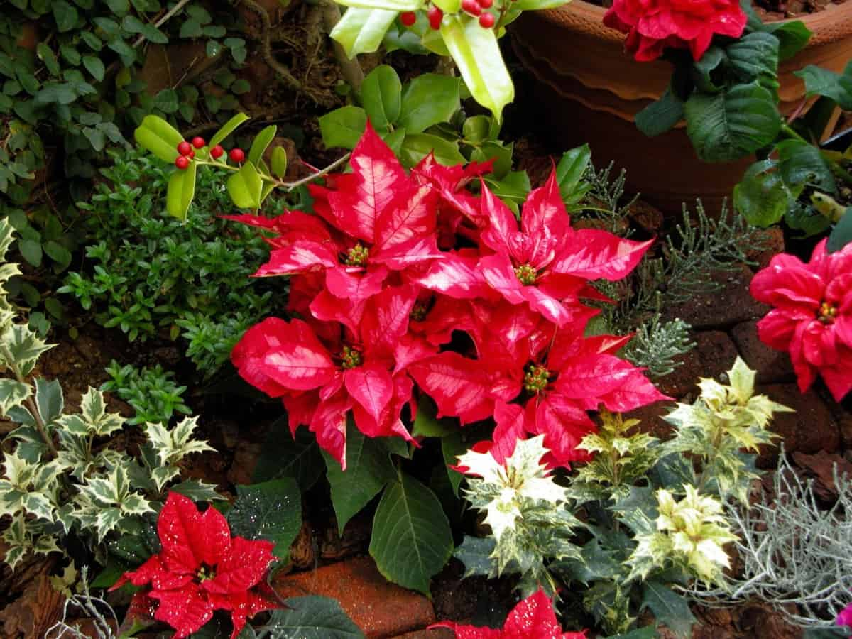 Holiday_Plants_You_Can_Grow_All_Year_Round_Amazing_Creation_Main