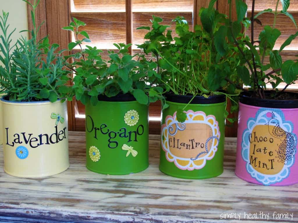 Growing_Herbs_Indoors_From_Seed_Amazing_Creation_plan