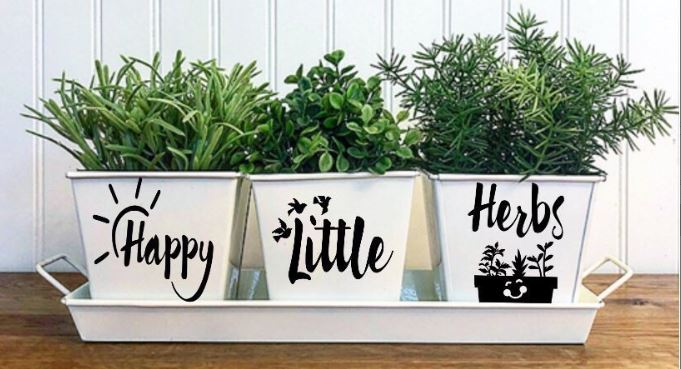 Growing_Herbs_Indoors_From_Seed_Amazing_Creation_temp