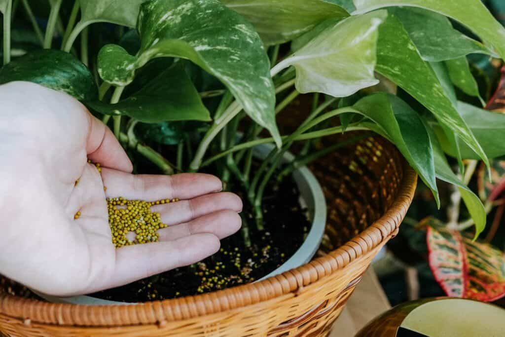 How_to_Fertilize_and_How_Often_Amazing_Creation_indoor_plants